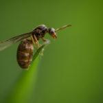 Macrophotographie de fourmi réalisée par Baptiste Leroy, photographe en Bretagne
