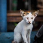 Portrait (photographie) de chaton réalisée par Baptiste Leroy, photographe en Bretagne (Tioman)