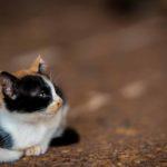 Portrait (photographie) de chaton réalisée par Baptiste Leroy, photographe en Bretagne (Malacca)