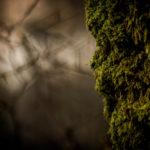 Portrait de nature réalisée par Baptiste Leroy, photographe en Bretagne