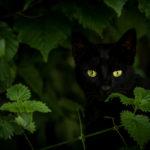 Photographie (portrait) de Numerobis (chat) réalisée par Baptiste Leroy, photographe en Bretagne