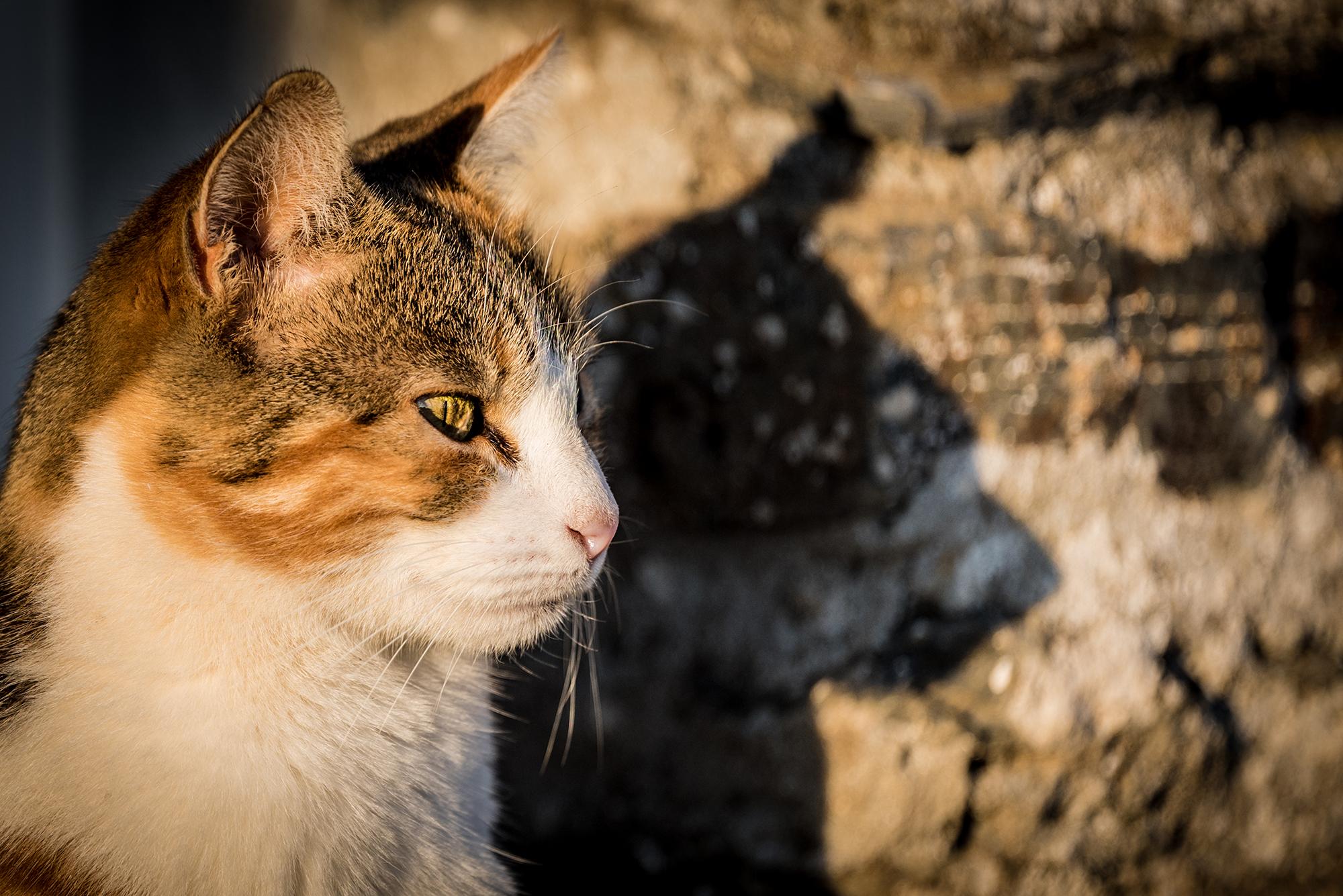 Photographie (portrait) de Plume (chat) réalisée par Baptiste Leroy, photographe en Bretagne