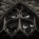 Photographie de colombes réalisée par Baptiste Leroy, photographe en Bretagne