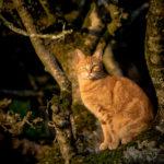 Photographie (portrait) de Tigrou (chat) réalisée par Baptiste Leroy, photographe en Bretagne (Lampaul-Guimiliau)