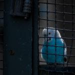 Photographie d'une perruche réalisée par Baptiste Leroy, photographe en Bretagne (Rennes)