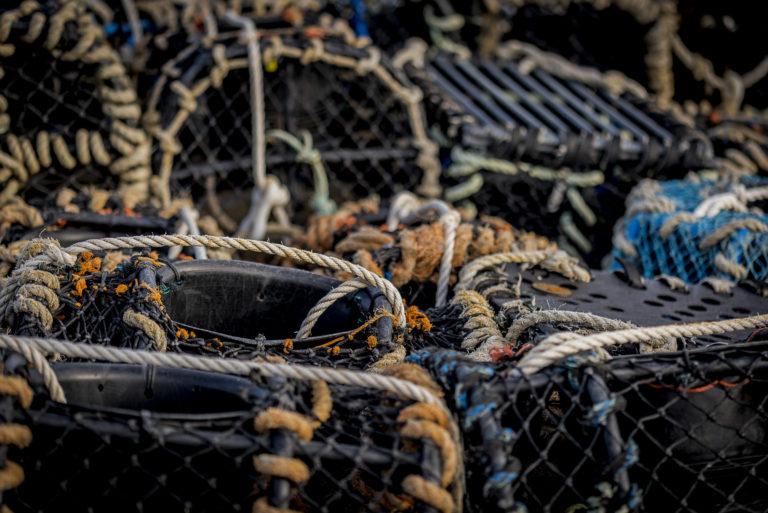 Le port de pêche de Roscoff